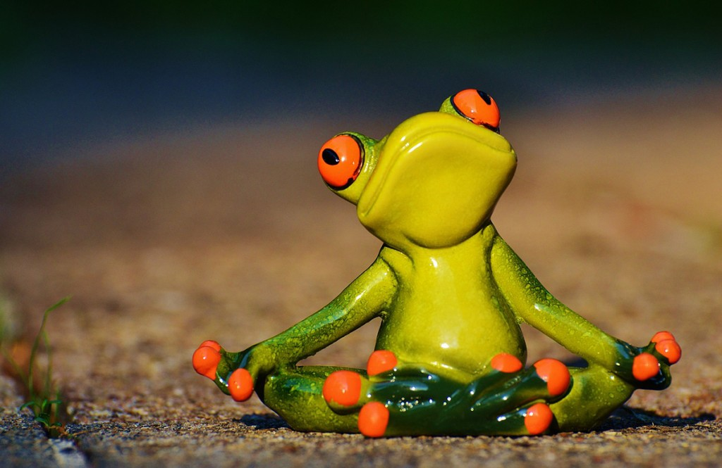 Frog doing yoga shows how to be healthy.